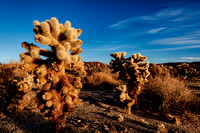 Cholla Sunrise 2