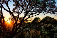 Botanic Garden Sunset 01